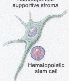 Cellules souches et médecine régénérative